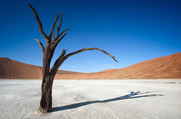 Ancient dead acacia tree standing in the barren and dry hot parched earth of Deadvlei in the Namib desert.