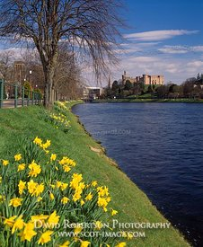 Image - Inverness Castle, Spring Daffodils, River Ness, Scotland.