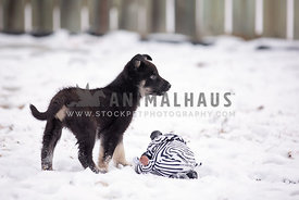 A young pup playing with a toy in the snow in the backyard