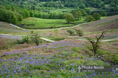 RYDAL 15A -Bluebells and Rydal Water