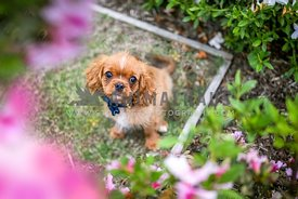 A puppy sits amongst the flowers