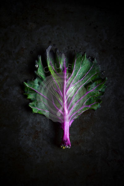 Kale on a dark background