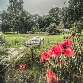 View through a window from inside of a bucolic garden, poppies, vintage garden table and garden