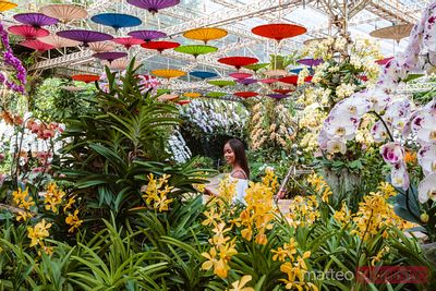 Asian woman at botanical garden, Chiang Mai, Thailand