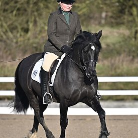14/02/2020 - Class 1 - British dressage - Brook Farm training centre - UK