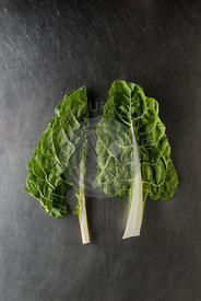 Raw Spinach on a grey slate background