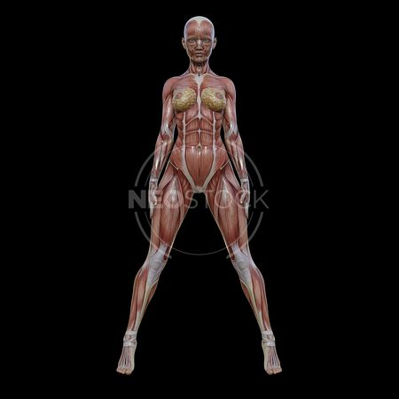 cg-body-pack-female-muscle-map-neostock-2