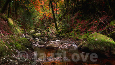 Stream flowing in rocky gorge, in autumn woodland.