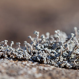 Macro_moss_and_plants_Iceland_emm.is-4
