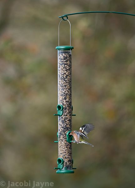 The One three port seed feeder