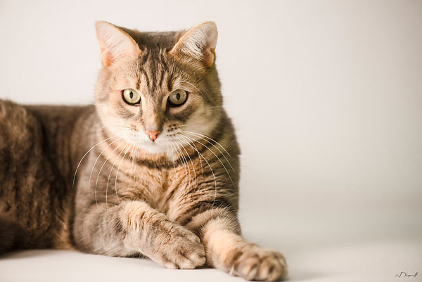 chat-portrait-2-décoration-eric_dincuff_photographe
