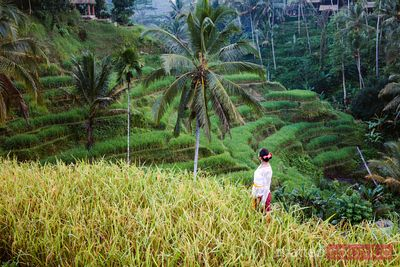 Balinese woman enjoying Tegallalang rice terraces, Bali
