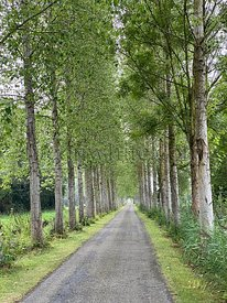 Small road passing through alley of trees in France, Noyelles-sur-Mer