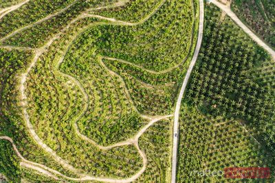 Aerial view of road through palm tree plantation, Thailand
