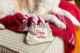 Dog on red blanket next to Happy Holidas gift bag