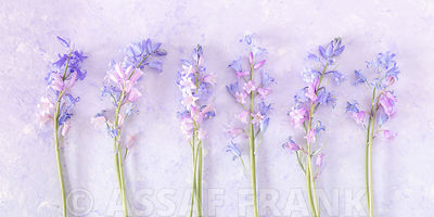 Bluebell flowers