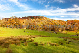 Loughrigg at Autumn